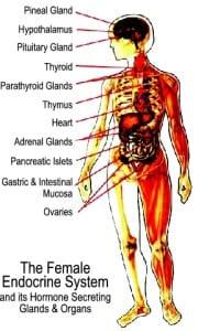 Female Endocrine System and Hormones