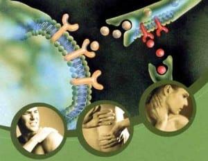 Receptor Pharmacology