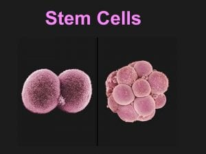A Fresh Look at Stem Cell Therapy