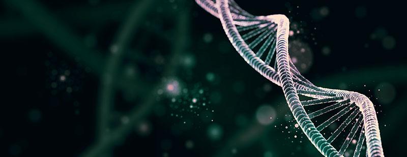 Adipose Derived Stem Cells